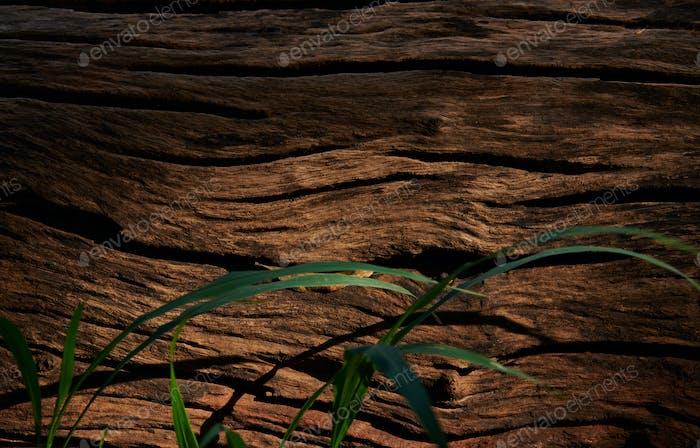 Hintergrund des rauen Totholzes mit dem Grashalm