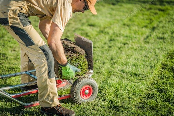 Gardener Piles Rolls Of Sod On Dolly Cart.