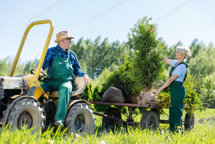 Senior Mann in Traktor Arbeit mit Frau Gärtnerin auf Bäumen Erhöhung Bauernhof