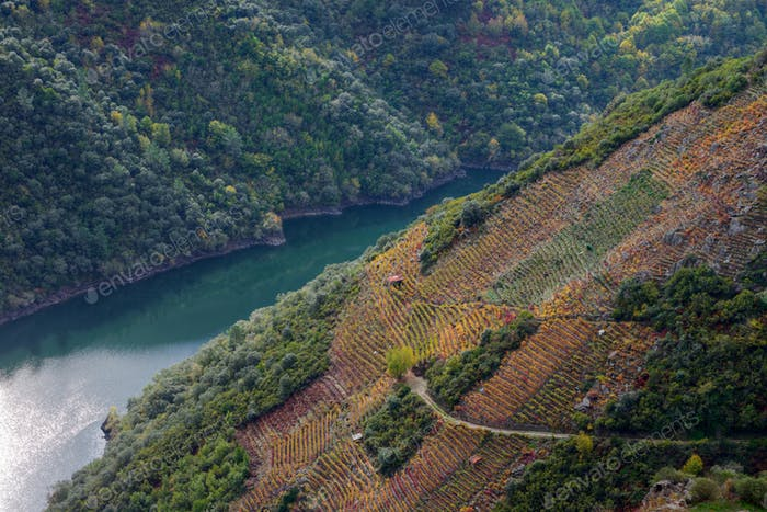 The Sil river between slopes covered with vineyards