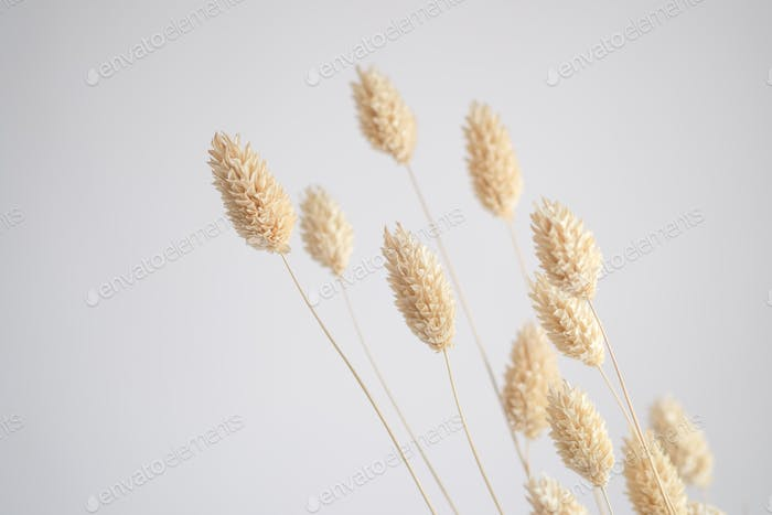 Dried flower head on white background