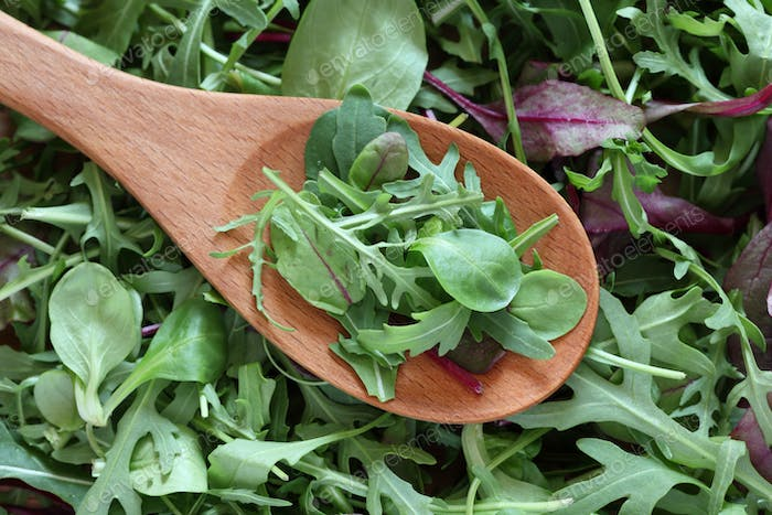 Mix of green salads in a wooden spoon