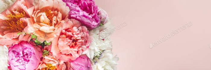 Erstaunlich frischer Haufen rosa Pfingstrosen