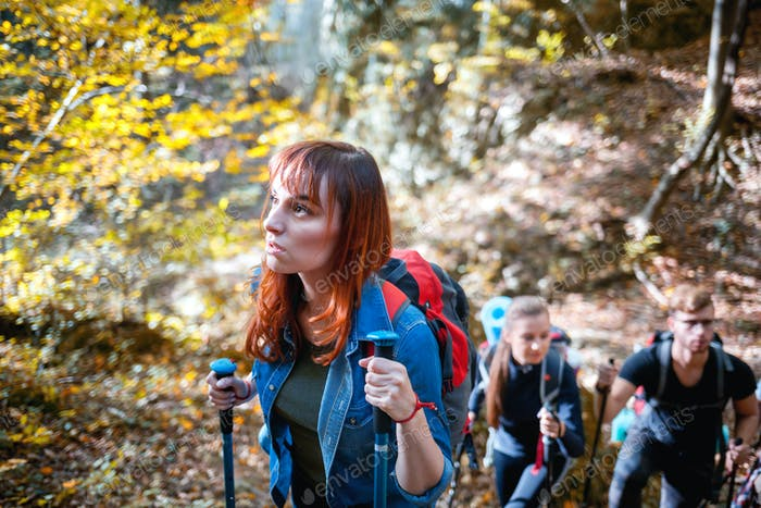 Friends trekking together in a forest