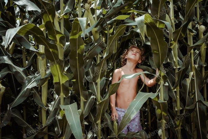 Little boy in shorts in cornfield