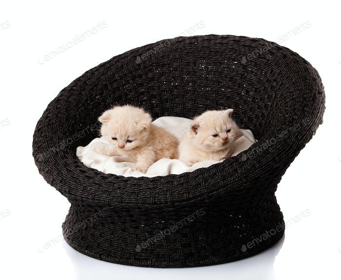 kittens sleeping in the basket