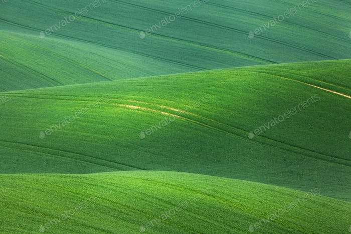 Minimalistic landscape with green fields, rolling hills at sunri