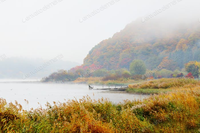 Misty lake in autumn