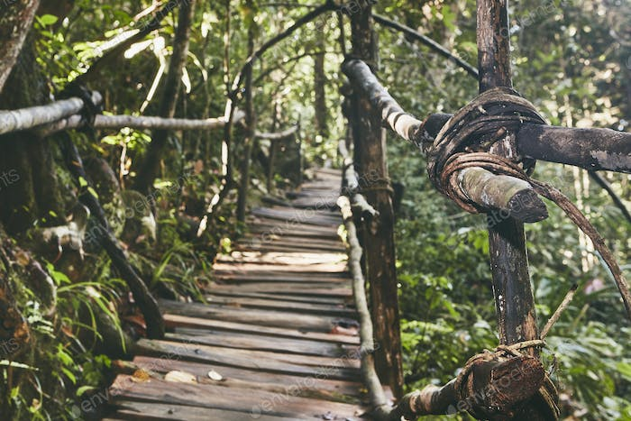 Walkway through jungle