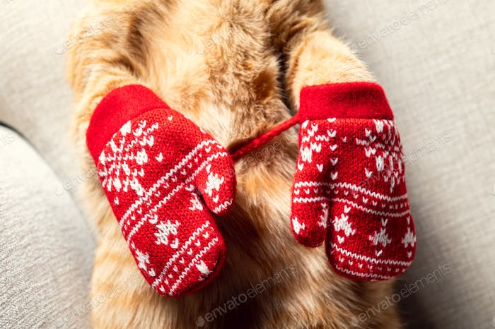 Cute ginger cat in xmas hat and mittens