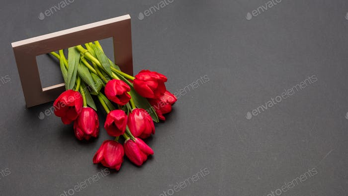 Red tulips bouquet out of a wooden frame, dark gray background, copy space