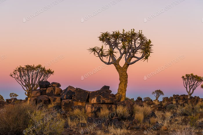 Blue hour becomes golden hour at quiver tree forest