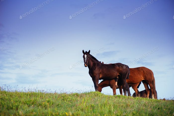 Portrait of beautiful horses in the pasture