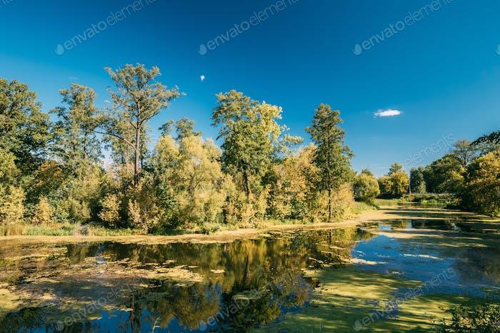 Landscape Lake Pond River At Summer Sunny Evening. Nature Of Bel