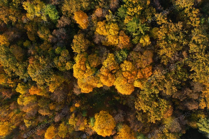 Aerial view of bright autumn forest as background
