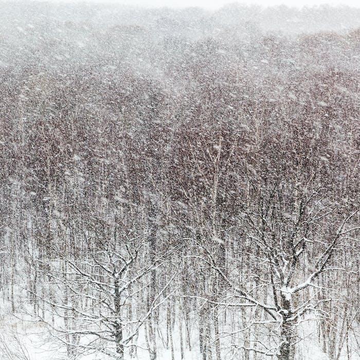 Schneesturm über Holz im Winter