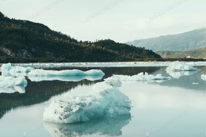 Icebergs floating off the shore at the end of the McBride Glacier, off Alaska.