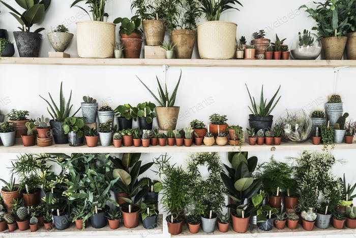 Large selection of plants in flowerpots on shelves in a plant shop.