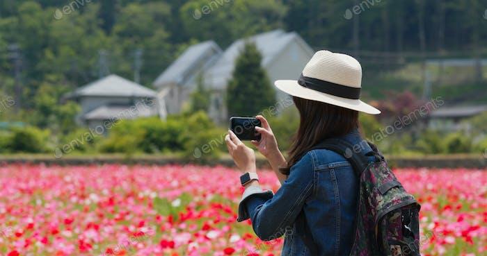 Mujer toma foto en el teléfono móvil en el jardín de campo de amapola
