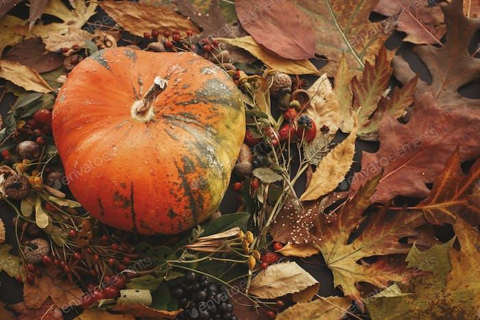 Happy Thanksgiving concept. Pumpkin in autumn leaves wreath