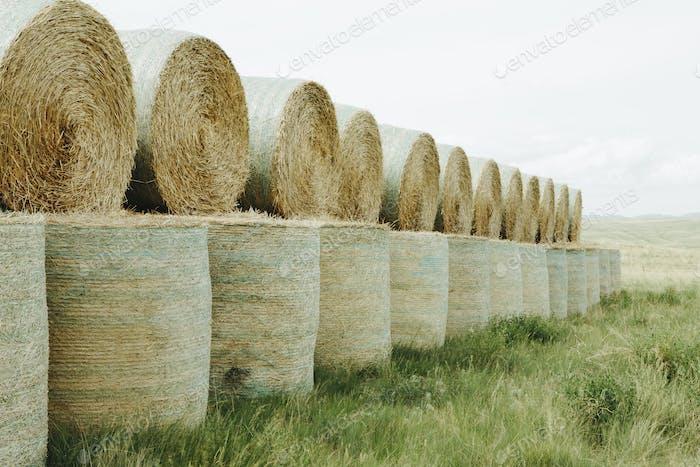 Envueltos redondos apilados fardos de heno en la pradera en el momento de la cosecha en Montana.