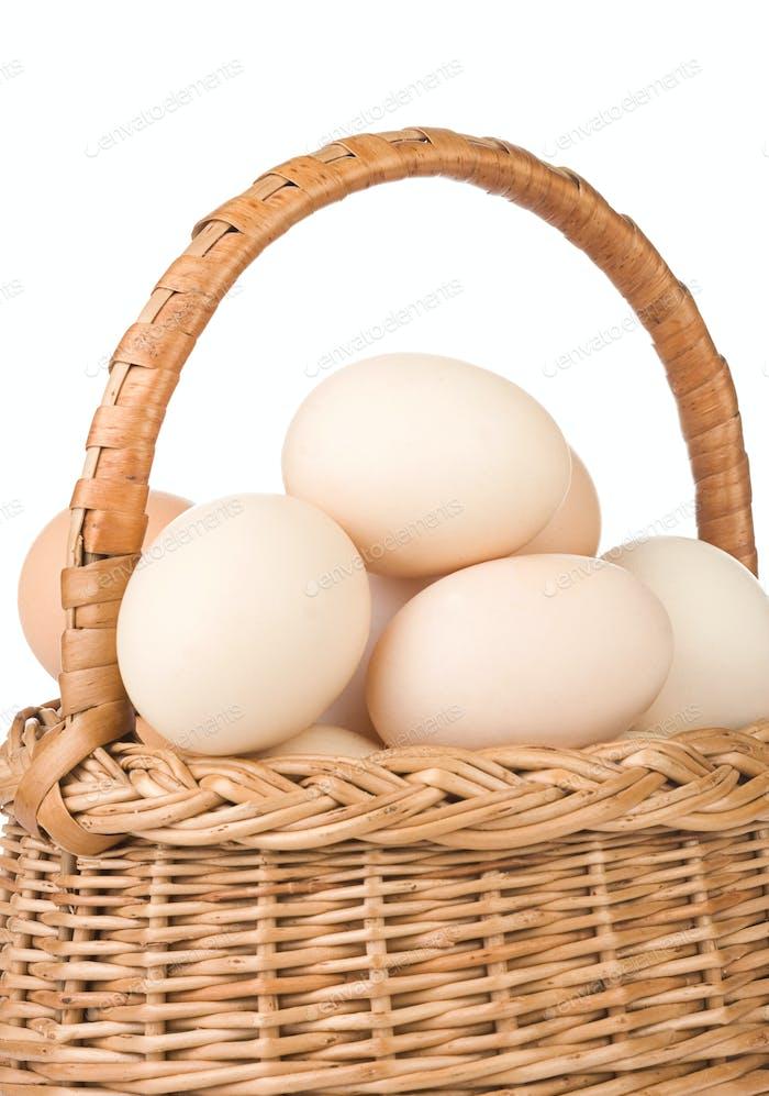 Isol eggu