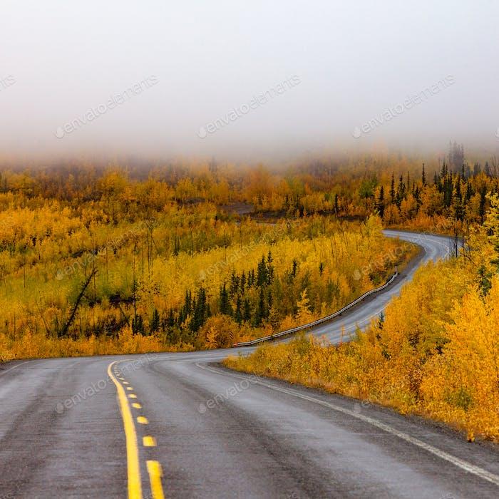 Winding golden fall taiga road Yukon Canada
