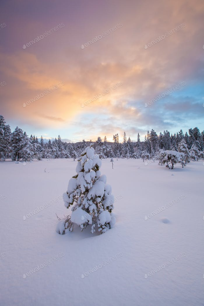 beautiful winter landscape snow tree