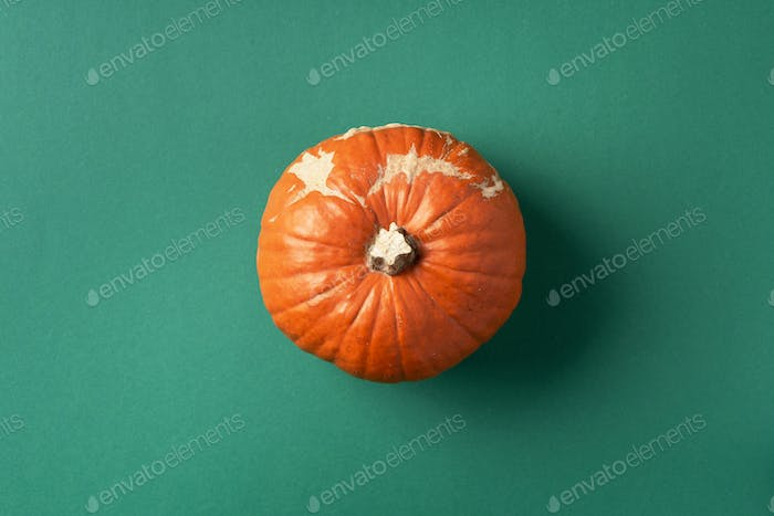 Trendy ugly organic vegetables. Pumpkin on green background. Cooking ugly food concept. Top view