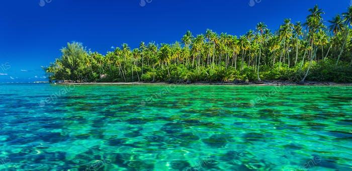 Unterwasserkorallenriff neben grüner tropischer Insel, Moorea, Tah