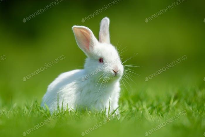 Lustige kleine weiße Kaninchen auf Frühlingsgras