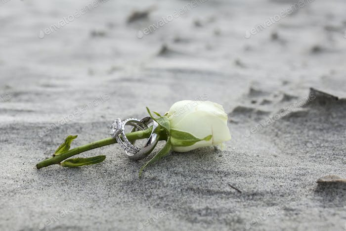 Close up shot of wedding rings on rose stem on a beach.