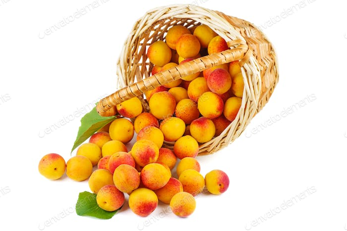 Fresh apricots in wicker basket isolated on white background