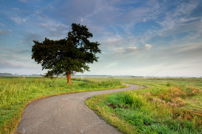 curved road among fields by tree