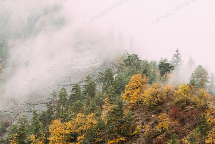 Thumbnail for Pines Growing On Rocky Slope Of Mountains. Clouds Fly Low Over R