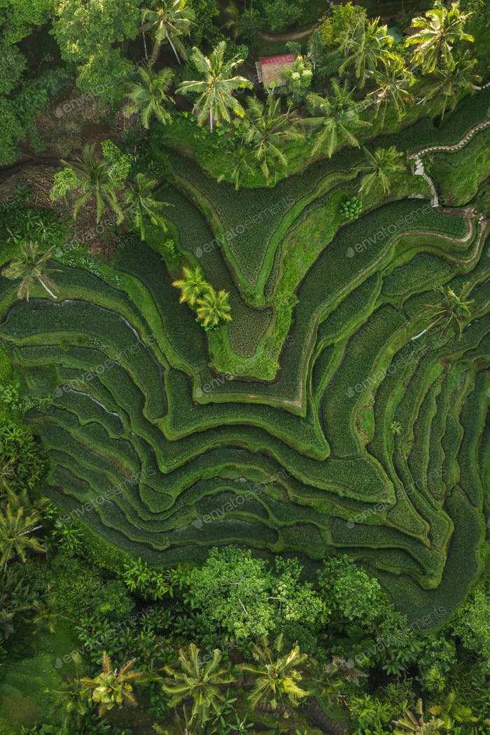 Aerial view of Tegallalang Bali rice terraces