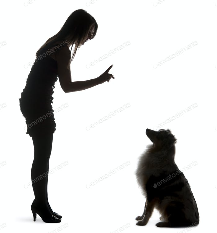 Young woman training Australian Shepherd dog in front of white background