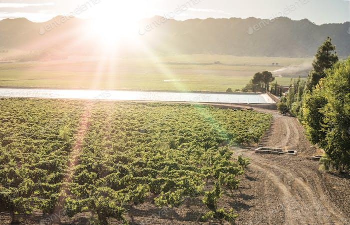 Weinberge und Bewässerungskanal