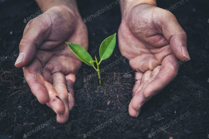 two hands holding and caring a young green plant with warm sunlight