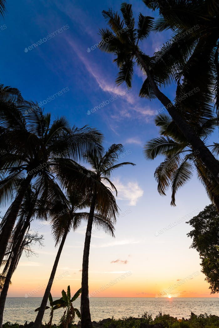 Exotic palms growing at seaside in Caribbean in sunset lights.