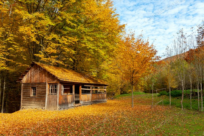Beautiful wooden house during fall peak season