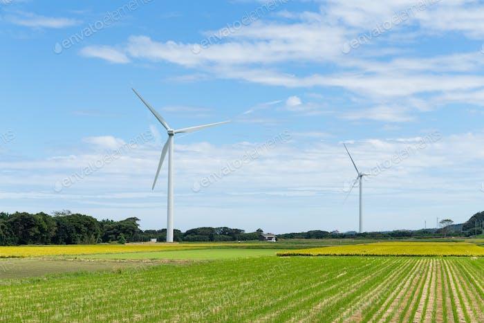 Wind turbine and field
