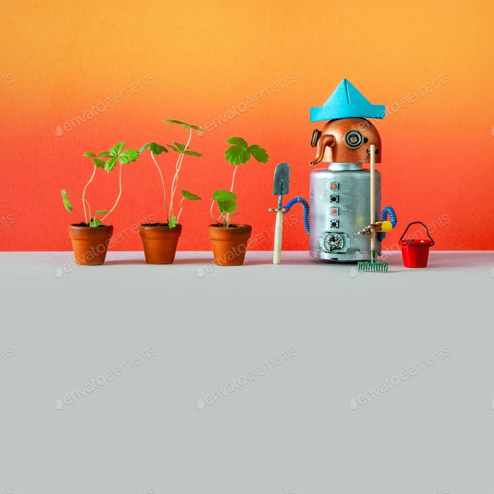 Ein mechanischer Roboter Agronomist Gärtner hat landwirtschaftliche Pflanzen in Blumentöpfen angebaut.