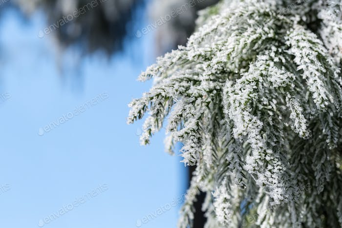 winter nature background