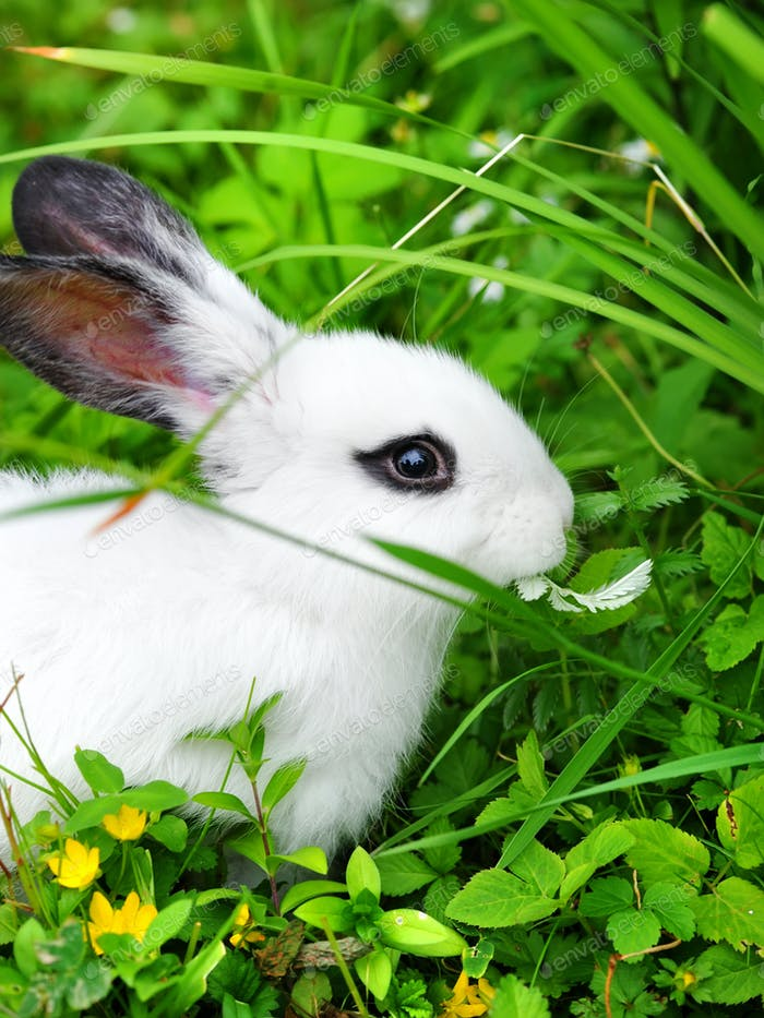 Baby white rabbit on grass