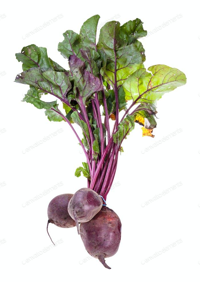 bundle of fresh organic garden beet roots isolated