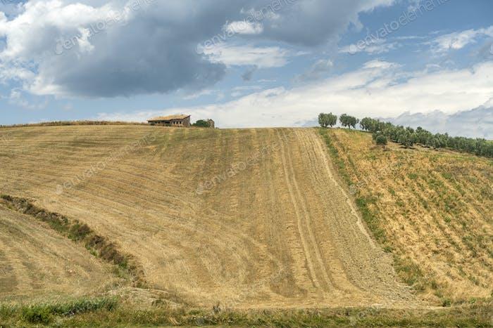 Sumer landscape in Apulia near Serracapriola