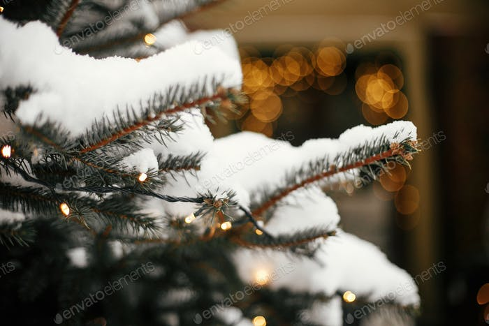 Stylish christmas trees with gold festive lights, covered with snow