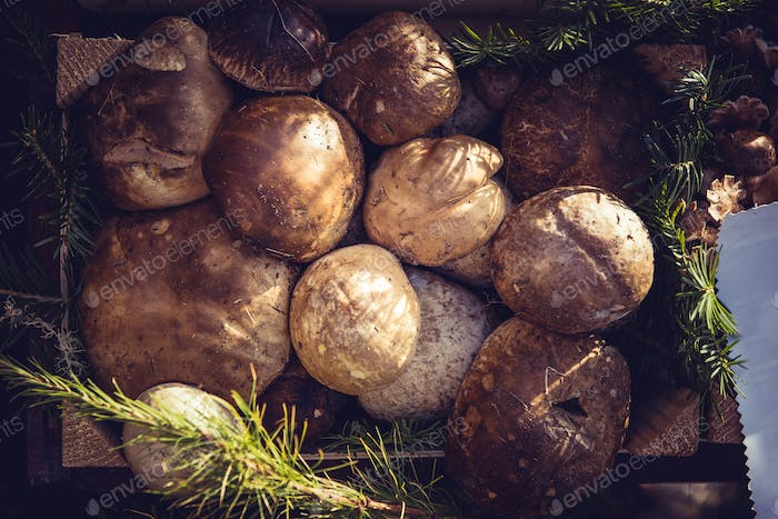 Edible mushrooms for selling in a market