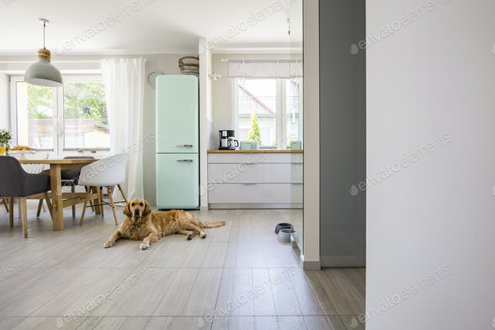 Dog in front of mint fridge in spacious interior with kitchen an